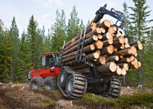 Особенности лесной промышленности в России